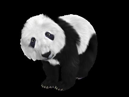 seth-rich-panda